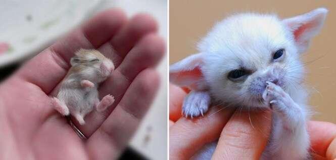 Adoráveis filhotes que cabem na palma da mão