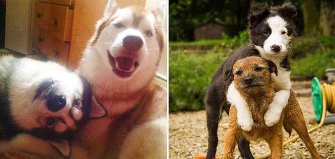 Cachorros mostrando o que é uma amizade verdadeira