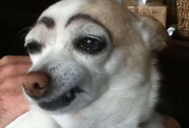 Cães que ficaram hilários de sobrancelhas