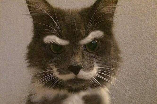 Razões que explicam por que você nunca deve ter um gato
