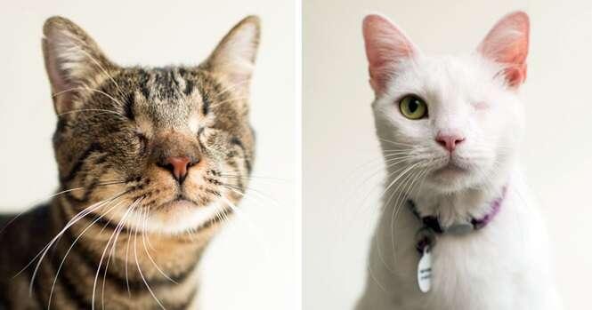 Fotógrafo registra beleza de gatos cegos para ajudá-los a serem adotados