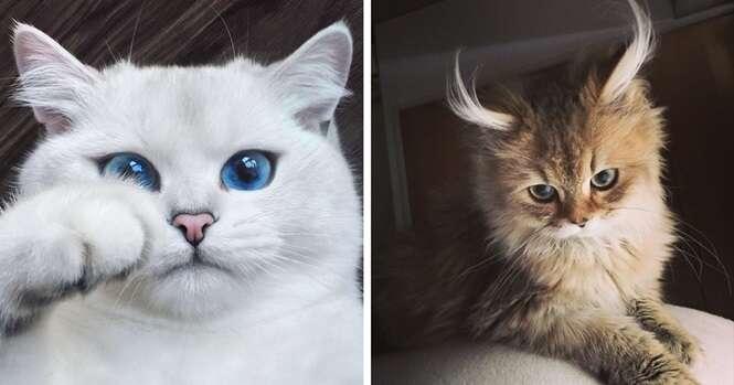 Os mais belos gatos do mundo