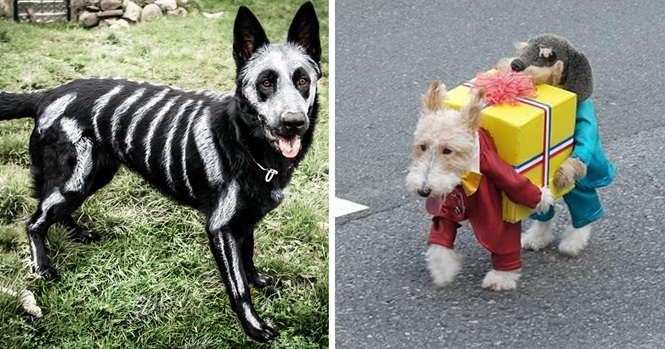 Fantasias sensacionais para cães para o Dia das Bruxas