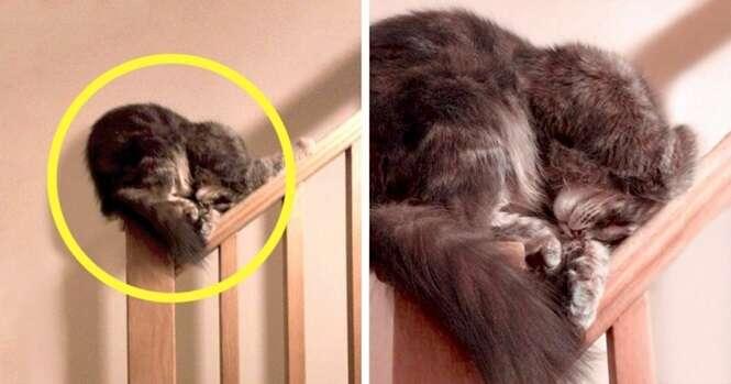Gatos que dormem em qualquer lugar sem problema algum