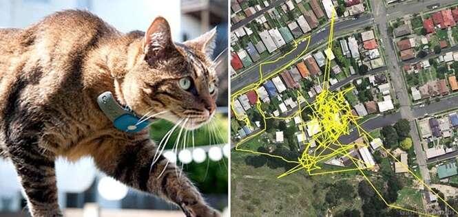 GPS revela o que um gato faz a noite