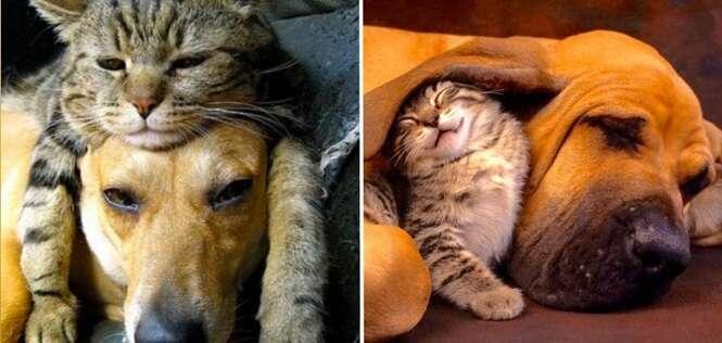 Belas imagens mostrando a amizade entre gatos e cães