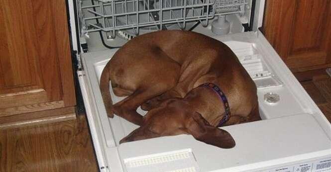 Cães que dormem onde ou como bem entendem