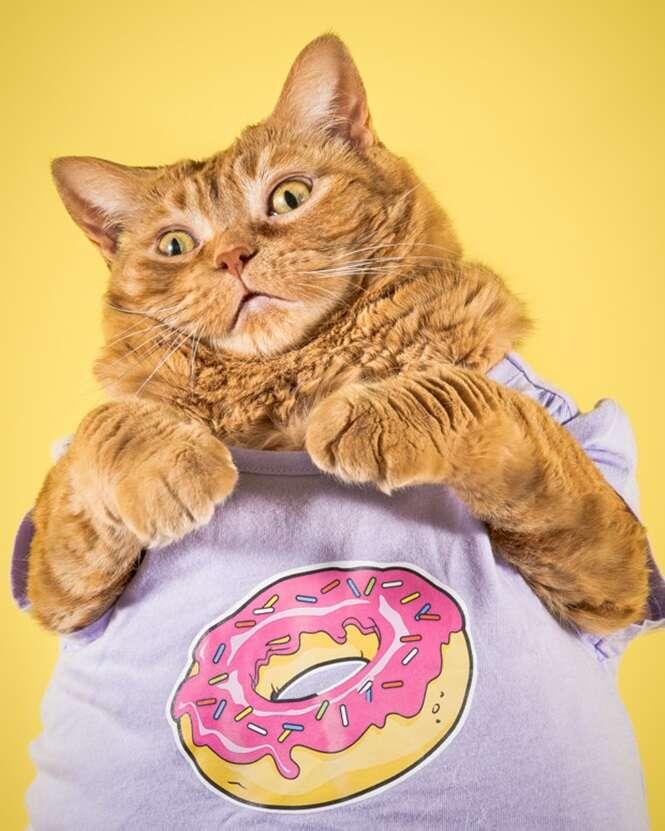 Fotógrafo apaixonado por gatos gordinhos registra bela sessão de imagens