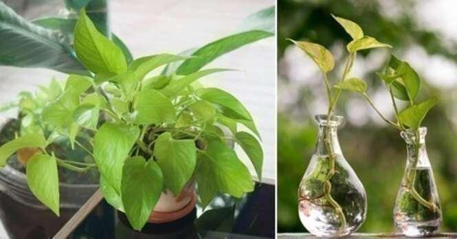 Esta planta é recomendada pela NASA para purificar a sua casa