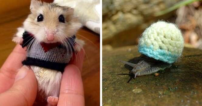 Animais que ficaram irresistíveis usando suéter