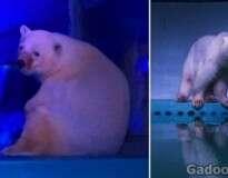Conheça o urso polar mais triste do mundo: ele vive em um shopping