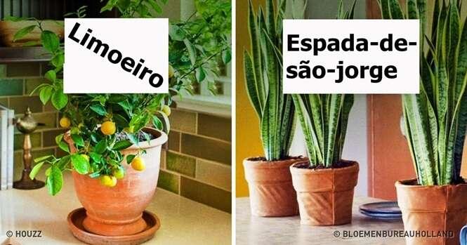 Plantas que criam o microclima perfeito em sua casa
