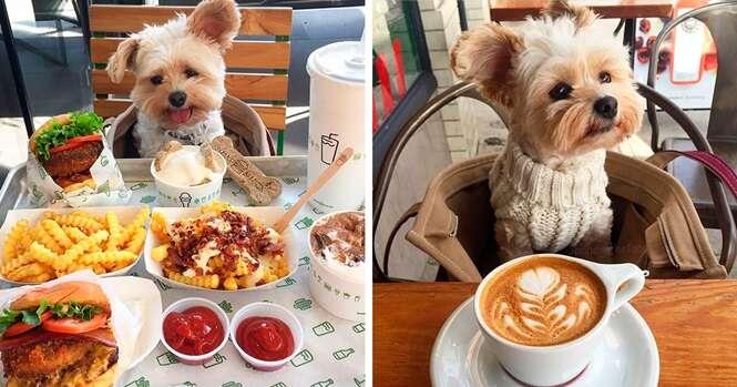 Fotos deste lindo cão com alguns pratos que te darão água na boca