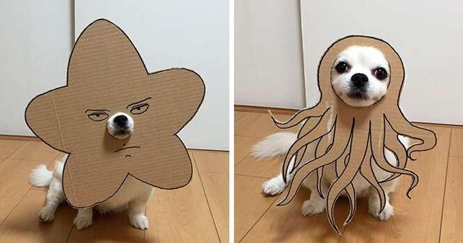 Japonesa cria 59 imagens divertidas usando papelão e seu cão