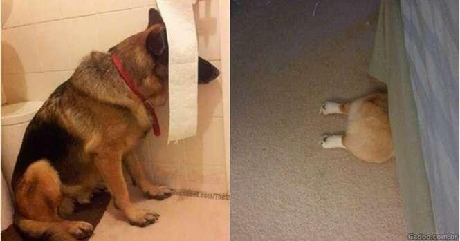 Cães que pensam ter encontrado o esconderijo perfeito