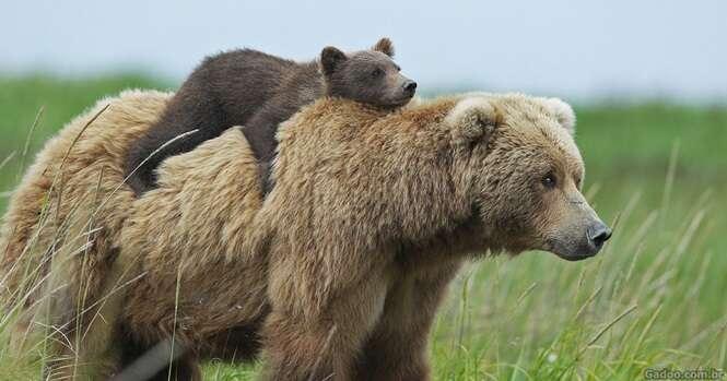 Fotos de ursinhos e suas mamães