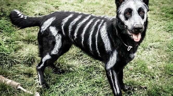 Animais prontos para o Dia das Bruxas