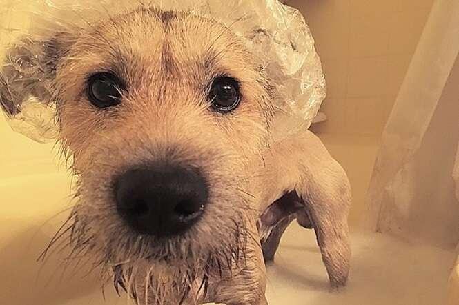 Fotos de cães no banho que vão derreter seu coração
