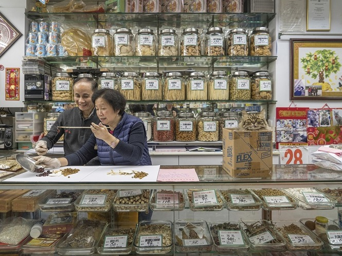 """Fotógrafo documenta a vida """"secreta"""" de gatos que vivem em lojas de Hong Kong"""