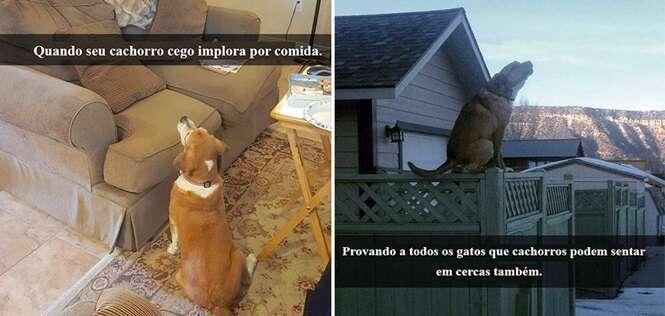 Snapchats mostrando cães em situações pra lá de engraçadas