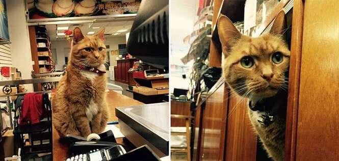 """Esse lindo gatinho """"trabalha"""" há nove anos e nunca tirou férias"""