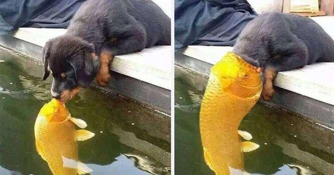 """Filhote de cachorro e peixe se """"beijando"""" inspiram internautas a fazerem dezenas de montagens hilárias"""