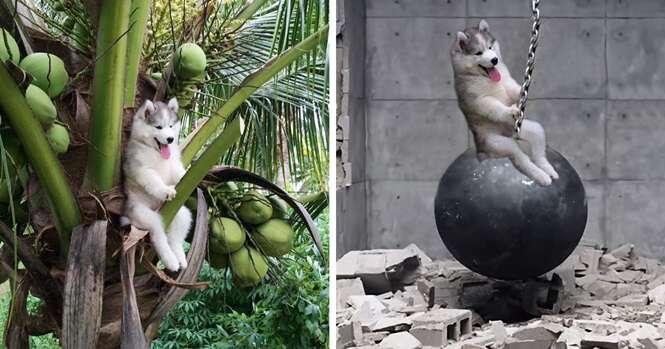 Cachorro fica preso em árvore e inspira internautas a fazerem montagens divertidas