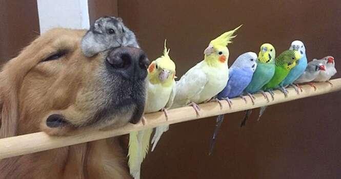 Cão, 8 pássaros e um hamster se tornam melhores amigos