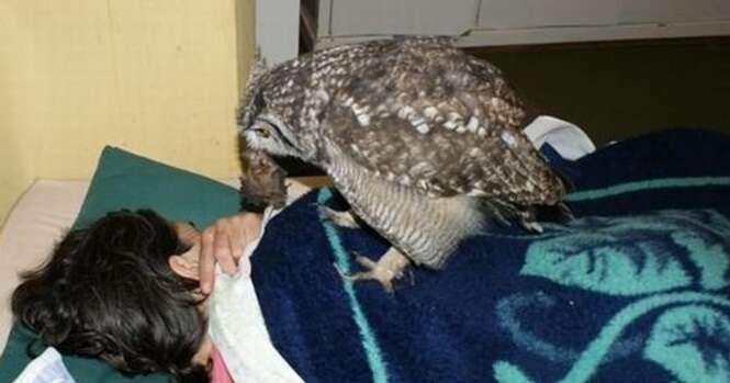 Veja como esta coruja retribui o garoto que a salvou