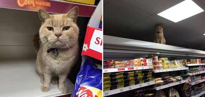 Esse gatinho já foi expulso de um supermercado várias vezes, mas sempre volta