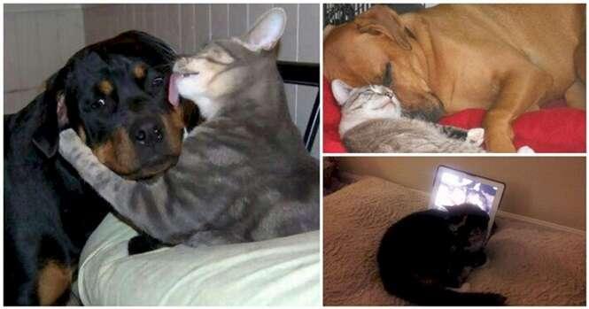 Imagens provando que cães e gatos podem ser bons amigos