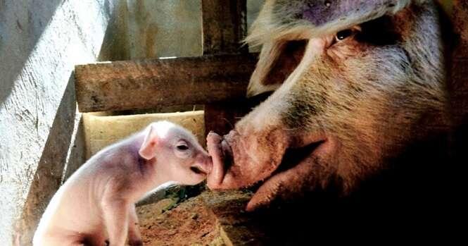 Fotos provando que mãe é mãe