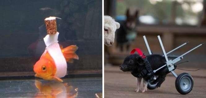 Animais com deficiência, mas que não ligam para isso