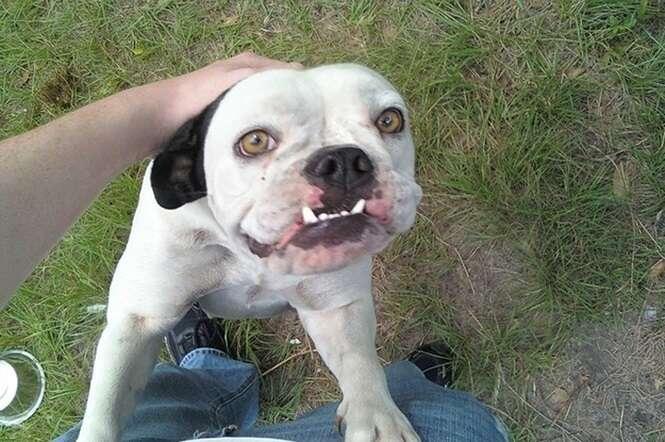 Cães bem mais fotogênicos que você