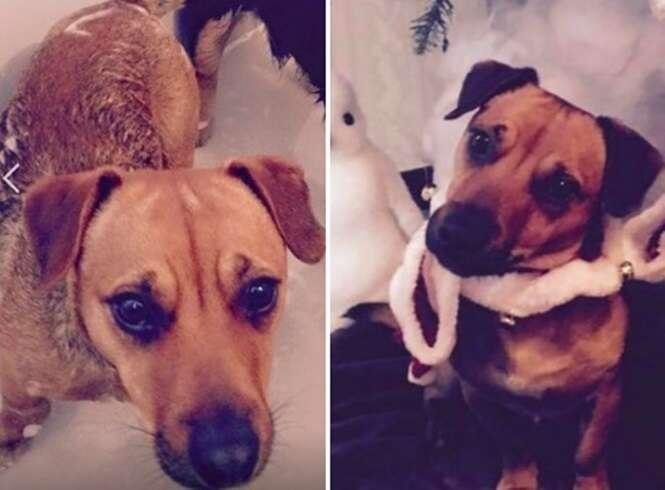 Cão tenta comer osso desenhado em sua tigela e imagens bombam na internet