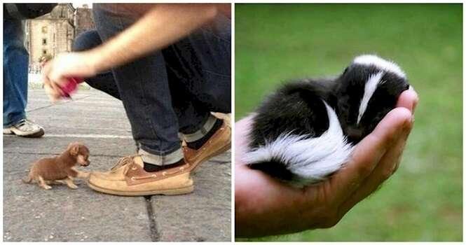 Animais minúsculos que vão derreter o seu coração