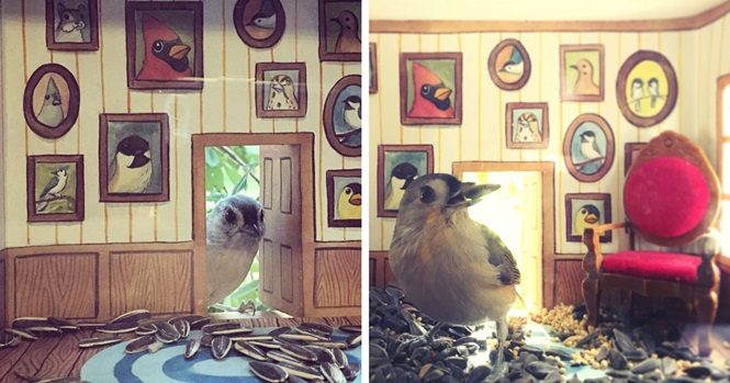 Esta mulher constrói casinhas adoráveis para pássaros que a visitam