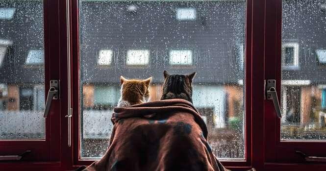 Todas as vezes que está chovendo, a dona destes gatos os fotografa perto da janela