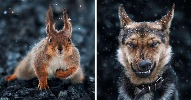 Incríveis imagens de animais registradas por fotógrafo ucraniano