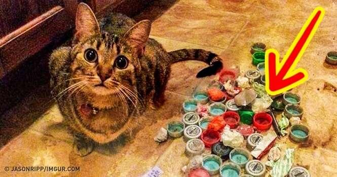 Gatos adoráveis que surpreenderam seus donos com seus comportamentos