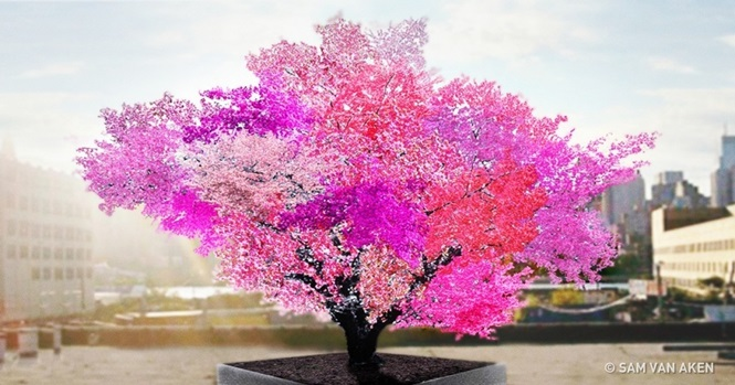 Surpreendentemente belas árvores que parecem ser de outro mundo