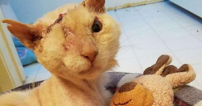 Apesar de ter sido vítima de ataque a ácido, este gato ainda confia nos seres humanos