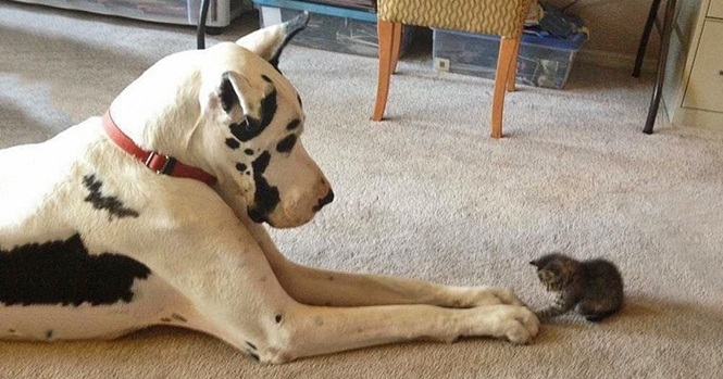Fotos super fofas mostrando a amizade entre cães e gatos
