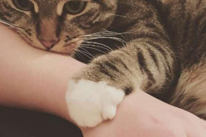 Coisas estranhas que todo mundo que tem gato já fez secretamente