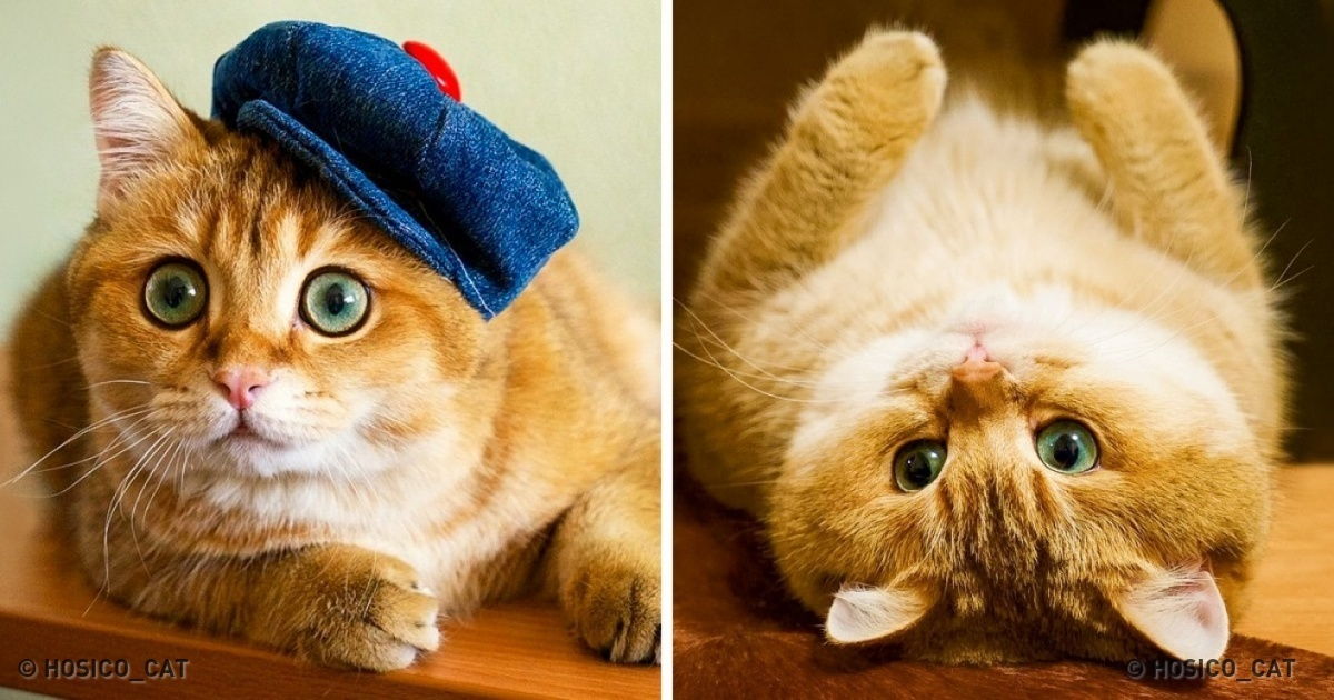 Conheça o gato que conquistou o Instagram