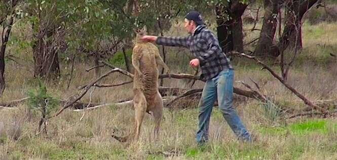 Vídeo: homem soca canguru na cara para salvar seu cachorro
