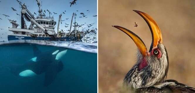 As fotos mais incríveis deste ano que retrataram a vida selvagem