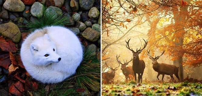 Fotos tão incríveis da natureza que você vai achar que são montagens