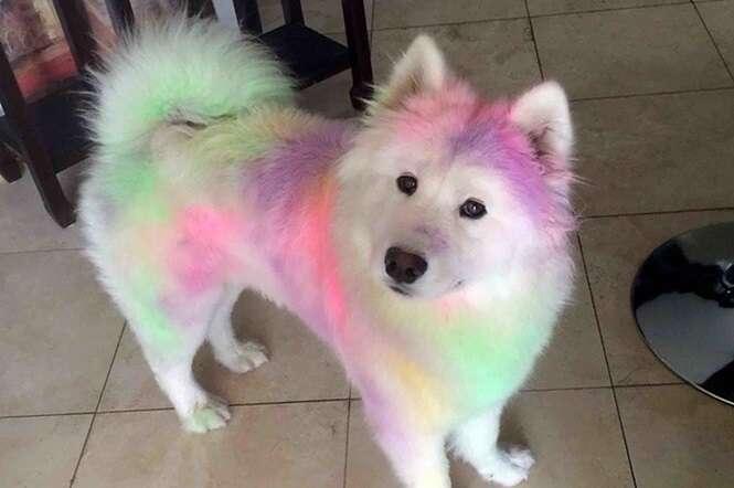 Imagens de cães da raça Samoieda que vão fazer você querer apertá-los