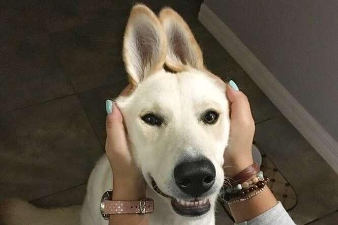 Fotos de cachorros que vão melhorar o seu dia